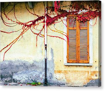Window And Red Vine Canvas Print
