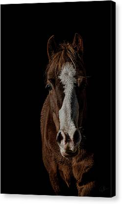 Window To The Soul Canvas Print by Paul Neville