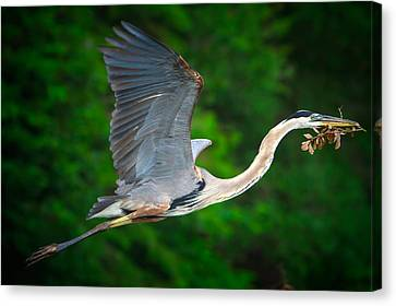 Wings Of Blue Canvas Print by Mark Andrew Thomas