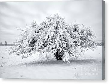 Winter Blanket Canvas Print by Mike Dawson