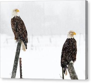 Winter Pair Canvas Print