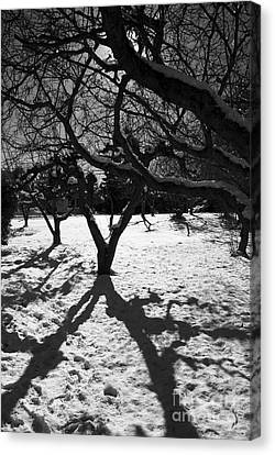 Canvas Print featuring the photograph Winter Shadows by Yulia Kazansky