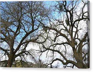 Canvas Print featuring the photograph Winter Trees At Fort Tejon Lebec California  by Floyd Snyder