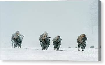 Canvas Print featuring the photograph Winter's Burden II by Sandra Bronstein