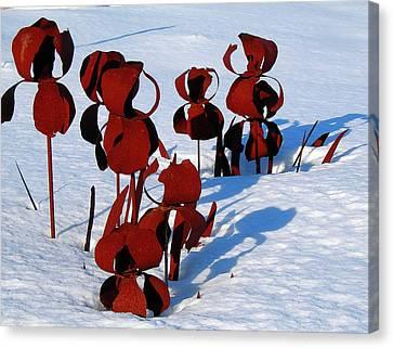 Winter's Garden Canvas Print by Randy Rosenberger