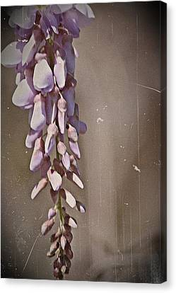 Wisteria Dreams- Fine Art Canvas Print by KayeCee Spain