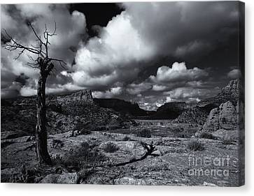 Withered Canvas Print by Mike Dawson