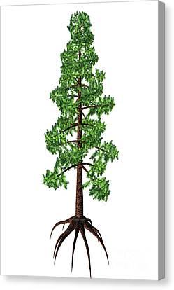 Wollemia Nobilis Tree Canvas Print