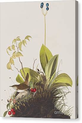 Wood Wren Canvas Print by John James Audubon
