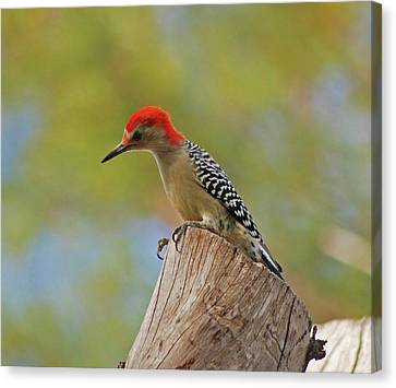 Canvas Print featuring the digital art 1- Woodpecker by Joseph Keane