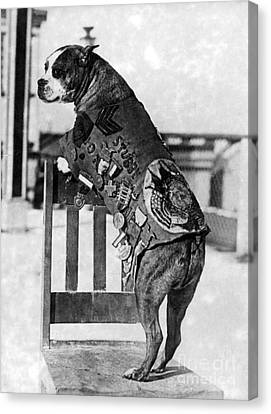 Wwi, Sergeant Stubby, American War Dog Canvas Print