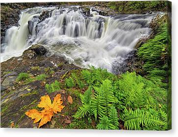 Yacolt Falls In Autumn Canvas Print by David Gn