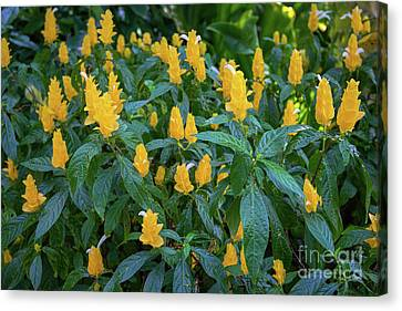 Yellow And Green Canvas Print by Jon Burch Photography