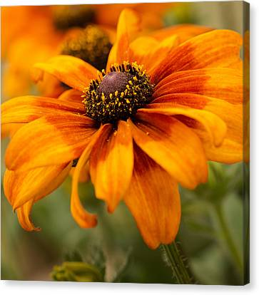 Yellow And Orange Petals Canvas Print by Mary Jo Allen