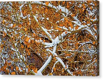 Yellow And White Canvas Print by Jon Burch Photography