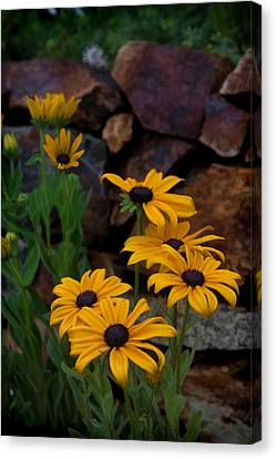 Yellow Beauty Canvas Print by Cherie Duran
