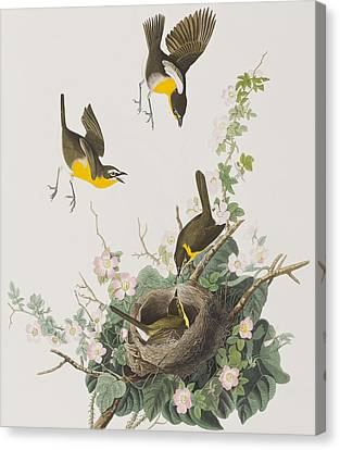 Yellow-breasted Chat Canvas Print by John James Audubon