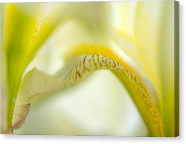 Yellow Iris 6 Canvas Print