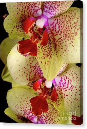 Canvas Print featuring the photograph Yellow Orchid by Dariusz Gudowicz