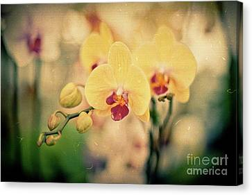 Canvas Print featuring the photograph Yellow Orchids by Ana V Ramirez