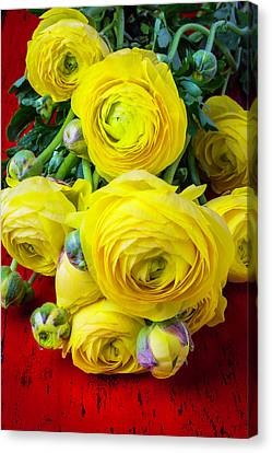 Yellow Ranunculus Canvas Print by Garry Gay