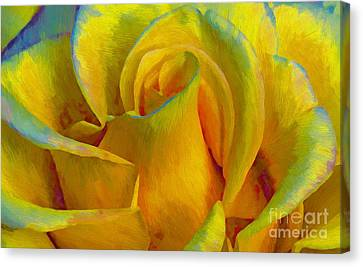 Yellow Rose Canvas Print by John  Kolenberg