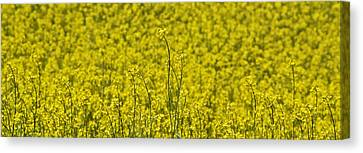 Canvas Print featuring the photograph Yellow by Wanda Krack