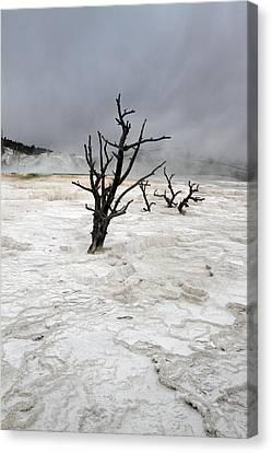 Yellowstone Mammoth Hot Springs Canvas Print