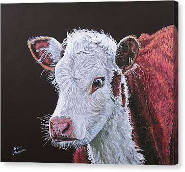 Young Bull Canvas Print by Stan Hamilton