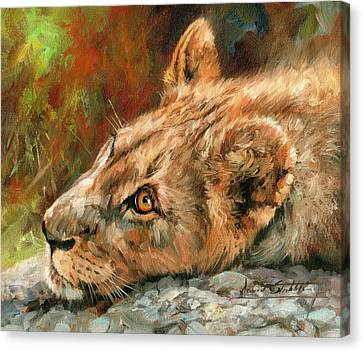 Young Lion Canvas Print by David Stribbling