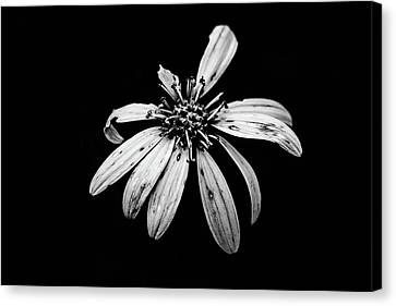 Canvas Print - You're Perfect To Me by Scott Pellegrin