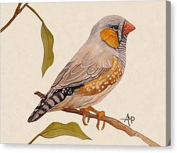 Zebra Finch Canvas Print