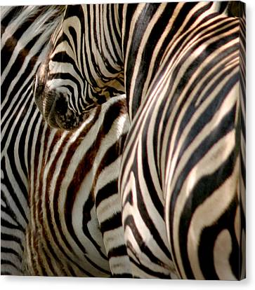 Zebra Stripes Canvas Print by Joseph G Holland