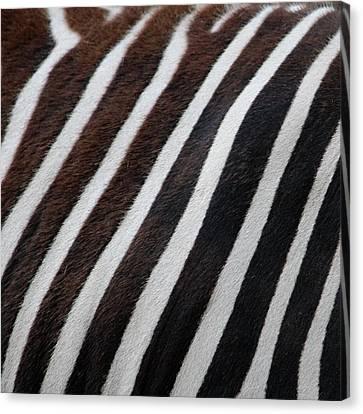 Zebra Wall Design 2 Canvas Print