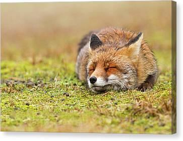 Zen Fox Series - Happy Fox Is Happy II Canvas Print by Roeselien Raimond