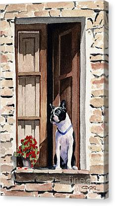 Boston Terrier Canvas Print by David Rogers
