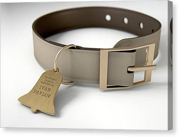 Leather Collar With Tag Canvas Print by Allan Swart