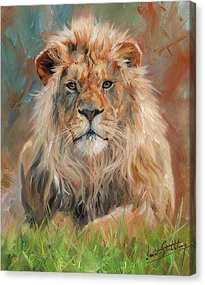 Canvas Print featuring the painting Lion by David Stribbling
