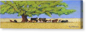 Angus Steer Canvas Print - 100 Degrees Plus by Tracy L Teeter