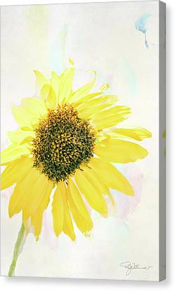 10845 Sunflower Canvas Print by Pamela Williams