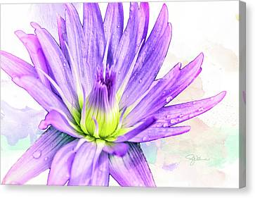 10889 Purple Lily Canvas Print by Pamela Williams