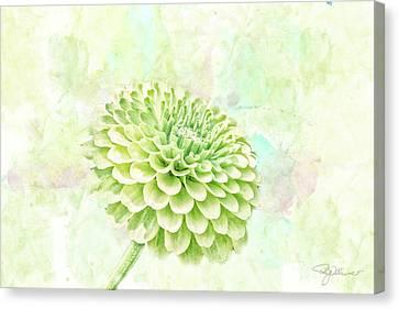10891 Green Chrysanthemum Canvas Print