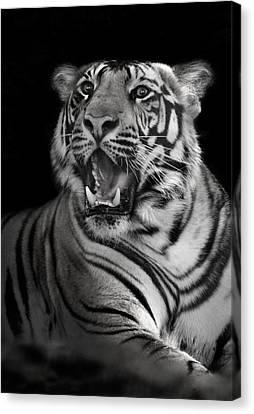 Bengal Tiger Panthera Tigris Tigris Canvas Print by Panoramic Images