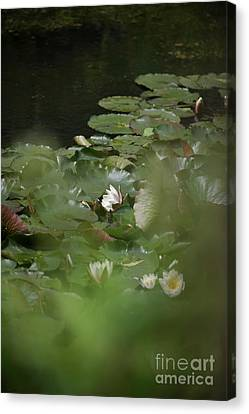 Fine Art Water Lily  Canvas Print