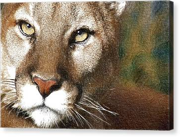 Panther Canvas Print - Lioness by Anna J Davis