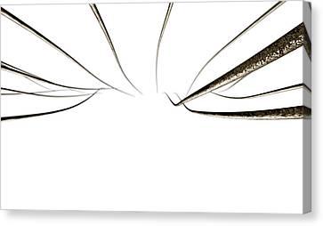 Component Canvas Print - Microscopic Hair Fibers by Allan Swart