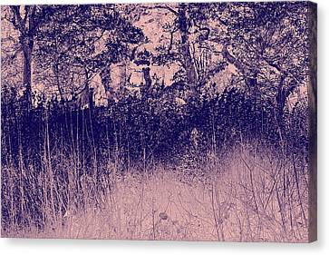 Clearing Canvas Print - Nature by Frances Lewis