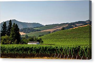 California Vineyard Canvas Print by Mountain Dreams