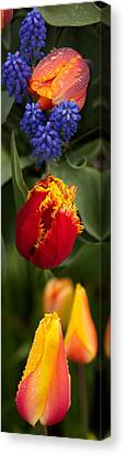 Close-up Of Flowers Canvas Print by Panoramic Images