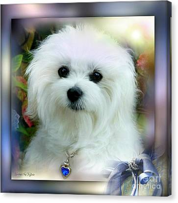 Hermes The Maltese Canvas Print by Morag Bates